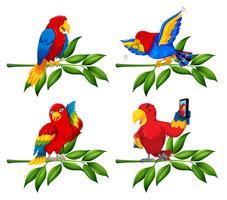 Conjunto de papagaio no ramo de árvore vetor