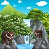Cena fundo, com, dois, ursos, em, cachoeira vetor