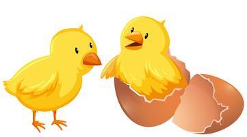 Dois, jovem, galinhas, em, concha vetor