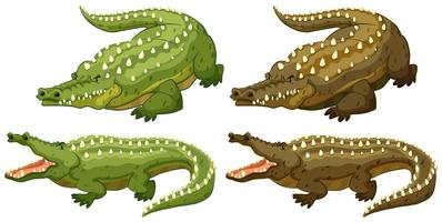 Crocodilo vetor