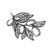 ramo com azeitonas. ilustração vetorial vetor