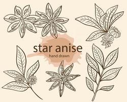 ilustração vetorial de esboço de tempero de anis estrelado vetor