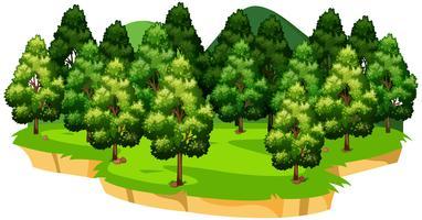 Uma paisagem verde natureza isolada vetor