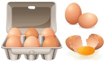 Ovos frescos vetor