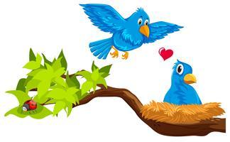 Casal de pássaros no ninho vetor