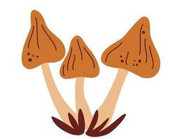 cogumelos. conjunto de cogumelos porcini. vetor