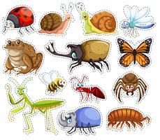 Conjunto de adesivos de muitos insetos vetor
