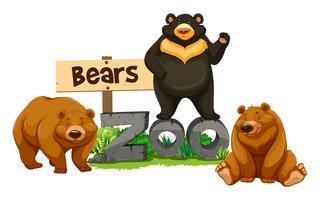 Três, ursos, em, a, jardim zoológico vetor