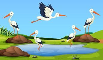 Migração de garças para a lagoa