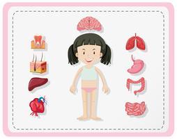 Diagrama mostrando partes humanas da menina
