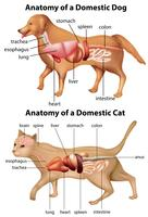 Anatomia do cão doméstico e gato vetor