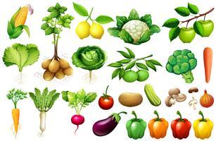 Vários tipos de vegetais vetor