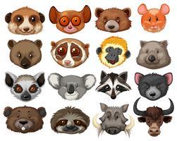 Conjunto de cabeças de animais vetor