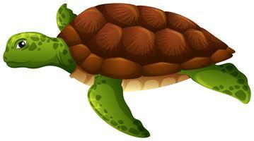 Fundo branco tartaruga verde vetor