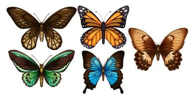 Um conjunto de borboletas coloridas vetor