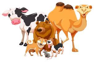 Animal vetor