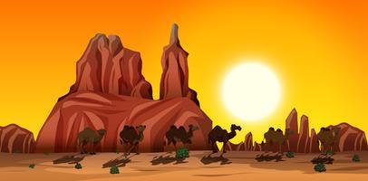 Uma cena no deserto com camelos vetor