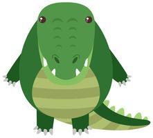 Crocodilo com corpo redondo