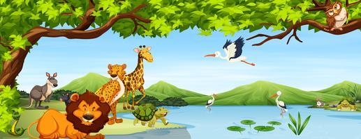 Vários animais selvagens cena vetor