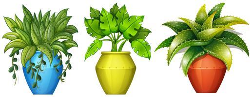 Plantas no pote vetor