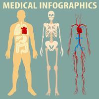 Infográfico médico do corpo humano vetor