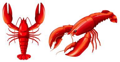 Jogo, de, lagosta vermelha vetor