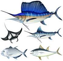 Tipo diferente de peixe vetor