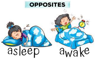 Palavras opostas para dormir e acordar
