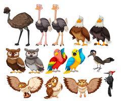 Conjunto de pássaros no fundo branco vetor