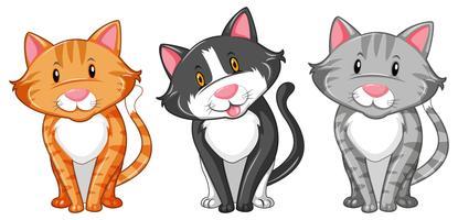 Três gatinhos em fundo branco vetor
