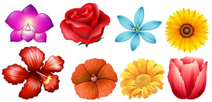 Tipo diferente de flores