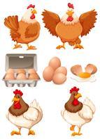 Galinhas e ovos frescos vetor