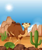 Camelo na cena do deserto vetor