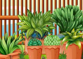Vasos com plantas vetor