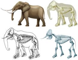 Elefante e seu corpo vetor