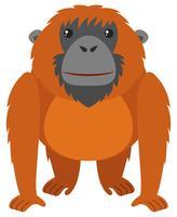 Orangotango com pêlo castanho vetor