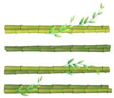 Um conjunto de bambu no fundo branco vetor