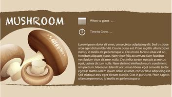 Infográfico design com cogumelo fresco vetor
