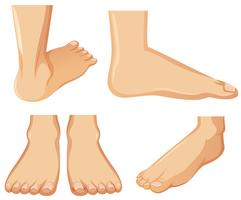 Anatomia do pé humano em fundo branco vetor