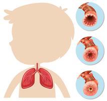 Uma anatomia do menino silhueta pulmão vetor