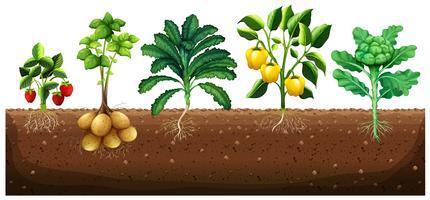 Muitos tipos de vegetais que plantam no chão vetor