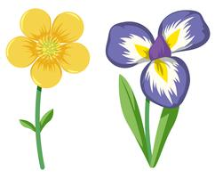 Conjunto de flores coloridas vetor