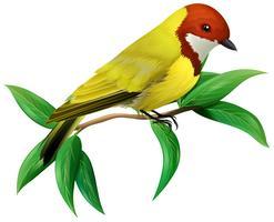 Um pássaro colorido no fundo branco vetor