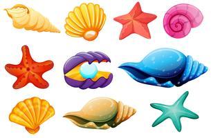 Coleção Shell vetor
