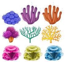 Diferentes tipos de recifes de corais vetor