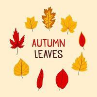 pacote de ícones de folhas de outono vetor