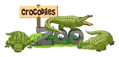 Três crocodilos no zoológico vetor