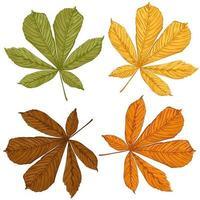 um conjunto de folhas de castanheiro de todas as estações ilustração vetorial desenhada à mão vetor