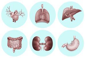 Partes diferentes do corpo humano vetor