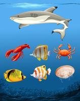 Muitos peixes tema subaquático vetor